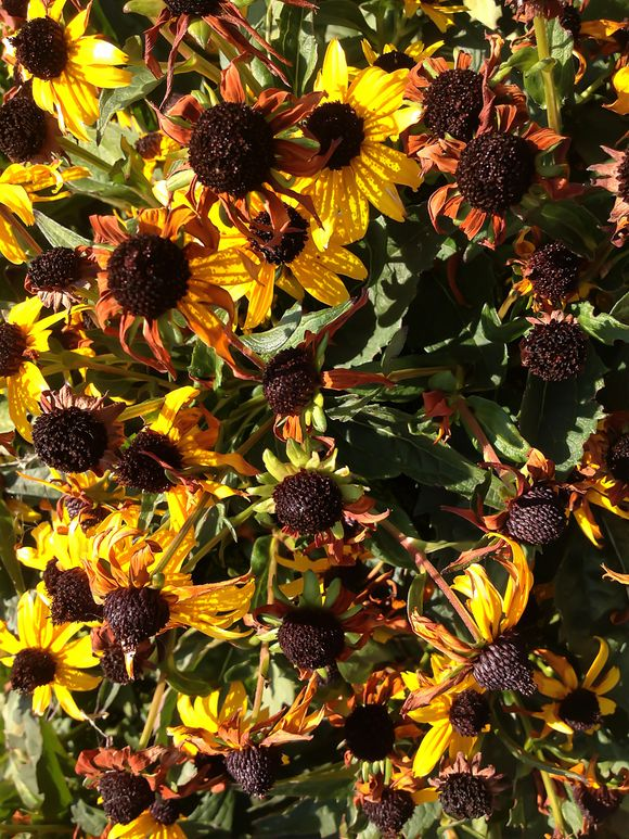 what we saw on our walk today 9.18.12