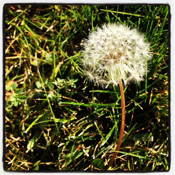 what we saw on our walk today 9.22.12